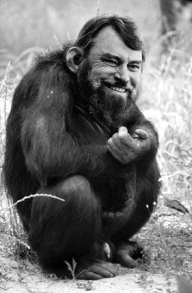blessed chimp